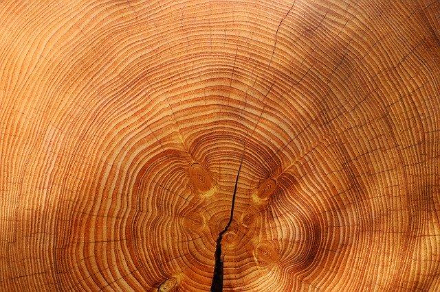 Baum – der du mich